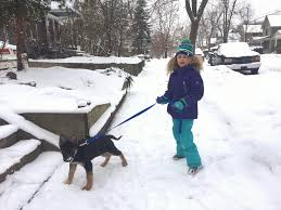 Keeping Your Dog Clean During Cold Seasons