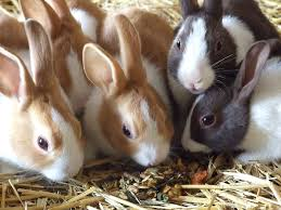 Rabbit Care Tips and Insurance